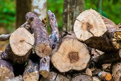 Firewood. Pile of cut wood in the forest reserved to be firewood Stock Photography