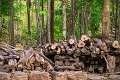 Firewood. Pile of cut wood in the forest reserved to be firewood Royalty Free Stock Photography