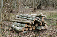 Firewood pile in a deciduous forest Royalty Free Stock Photo