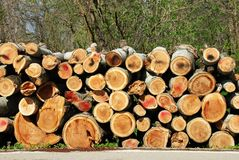 Firewood pile outdoor Stock Photo