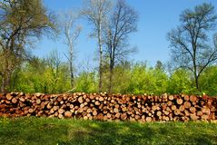 Firewood pile outdoor Stock Images
