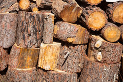 Firewood of pine tree stacked in a row Stock Photos