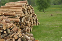 Firewood, preparations for the winter. Stock Photo