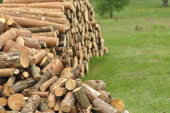 Firewood, preparations for the winter Stock Image