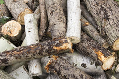 Firewood prepared for fireplace and boiler,Firewood in fireplace Stock Images