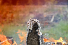 Smoldering board. Firewood with red-hot smoldering charcoal embers in purple and bluish hues, top view Stock Photo