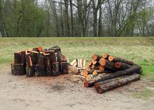 Firewood rick for winter, Lithuania Stock Photography