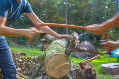 Firewood sawing Stock Images