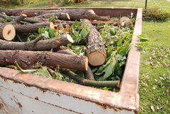 Firewood in Skip. Cut tree branches and green foliage in garbage skip Royalty Free Stock Photos