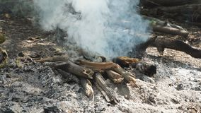 Firewood Smoking in campfire. Firewood Smoking in the campfire stock video