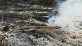 Firewood Smoking in campfire. Firewood Smoking in the campfire stock video footage