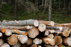 Firewood Source of Energy Royalty Free Stock Photo