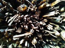 Firewood in Southeast Asia Royalty Free Stock Photos