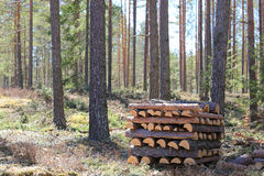 Firewood in Spring Forest Royalty Free Stock Images