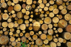 Firewood stack background. Firewood stack detail view as background stock image