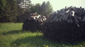 Firewood stack in the forest. 4K stock footage