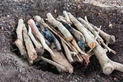 Firewood stack p Royalty Free Stock Photo
