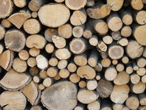 Firewood stacked. Section of tree trunk texture Royalty Free Stock Photos