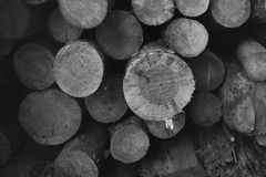 Firewood stacked. Black and white photo stock images
