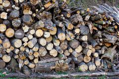Firewood stacked in pile. Harvesting of firewood. Texture of fi stock image
