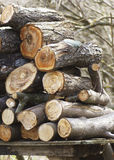 Firewood stacked in a pile on the nature. Stock Photos