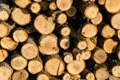 Firewood stacked in a pile. Sunlit Stock Photo