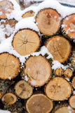 Firewood stacked in a pile sunlit. At winter Stock Photography