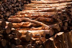 Firewood stacked and prepared for winter Pile of wood logs Royalty Free Stock Photo