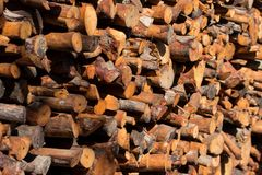 Firewood stacked and prepared for winter Pile of wood logs Stock Image