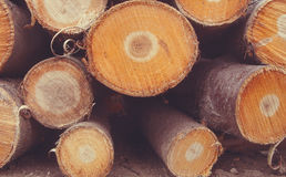 The firewood is stacked. Several breeds Royalty Free Stock Photography