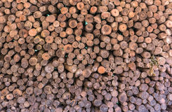 Firewood stacked up in a pile Royalty Free Stock Images