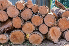Firewood stacked up in a pile for kindle Royalty Free Stock Photo
