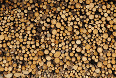 Firewood stacked for winter. Stock Photo