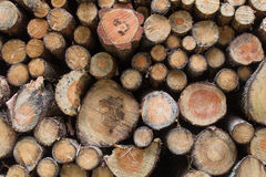 Firewood stapled Royalty Free Stock Image