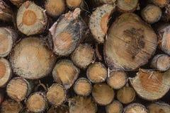 Firewood stapled Royalty Free Stock Photo