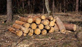 Firewood store Stock Photography