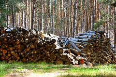 Firewood. Store firewood. Wood burned as fuel stock images
