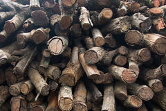 Firewood. Stow of firewood just before winter Stock Photos
