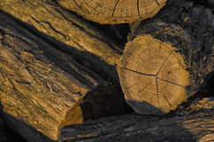 Firewood at the sunset Stock Photo