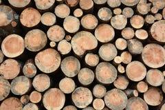 Firewood texture Stock Image
