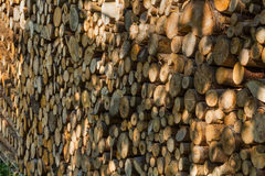 Firewood texture, after the sawing wood Stock Photography