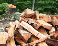 Firewood with tree stump in the background Stock Image