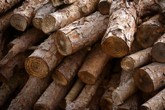 Firewood trunks Royalty Free Stock Photo
