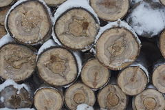 Firewood under snow close up. Wood texture. White, Yellow. Russia. Siberia. Royalty Free Stock Photo