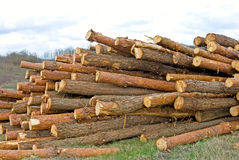 Firewood in the village Royalty Free Stock Photography