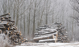 Firewood in the winter Royalty Free Stock Photos