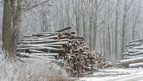 Firewood in the winter Royalty Free Stock Images