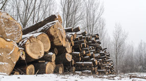 Firewood in the winter Stock Images