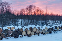 Firewood in winter Stock Photography