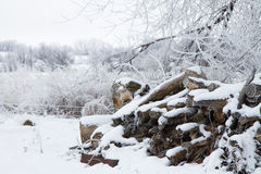 Firewood for the winter Stock Images